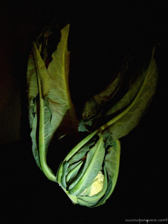 Conchiglie con broccolo di bassano : il broccolo di Bassano